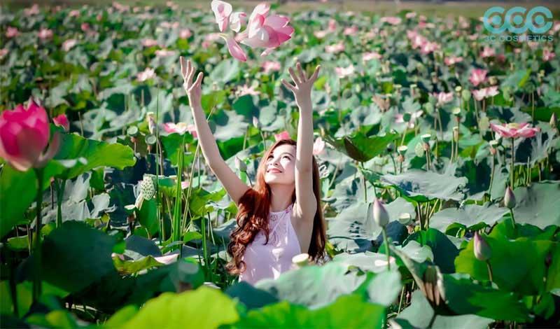 Cánh đồng sen Hòa Qúy đẹp hoang sơ trong lòng ngoại ô của Ngũ Hành Sơn