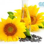 Khám phá công thức làm kem dưỡng ẩm từ dầu hoa hướng dương