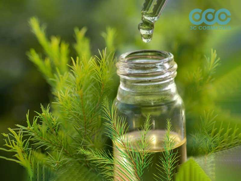 Ngăn ngừa virus corona bằng tinh dầu tràm