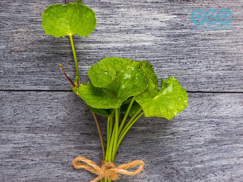 công dụng của chiết xuất rau má bạn nên biết